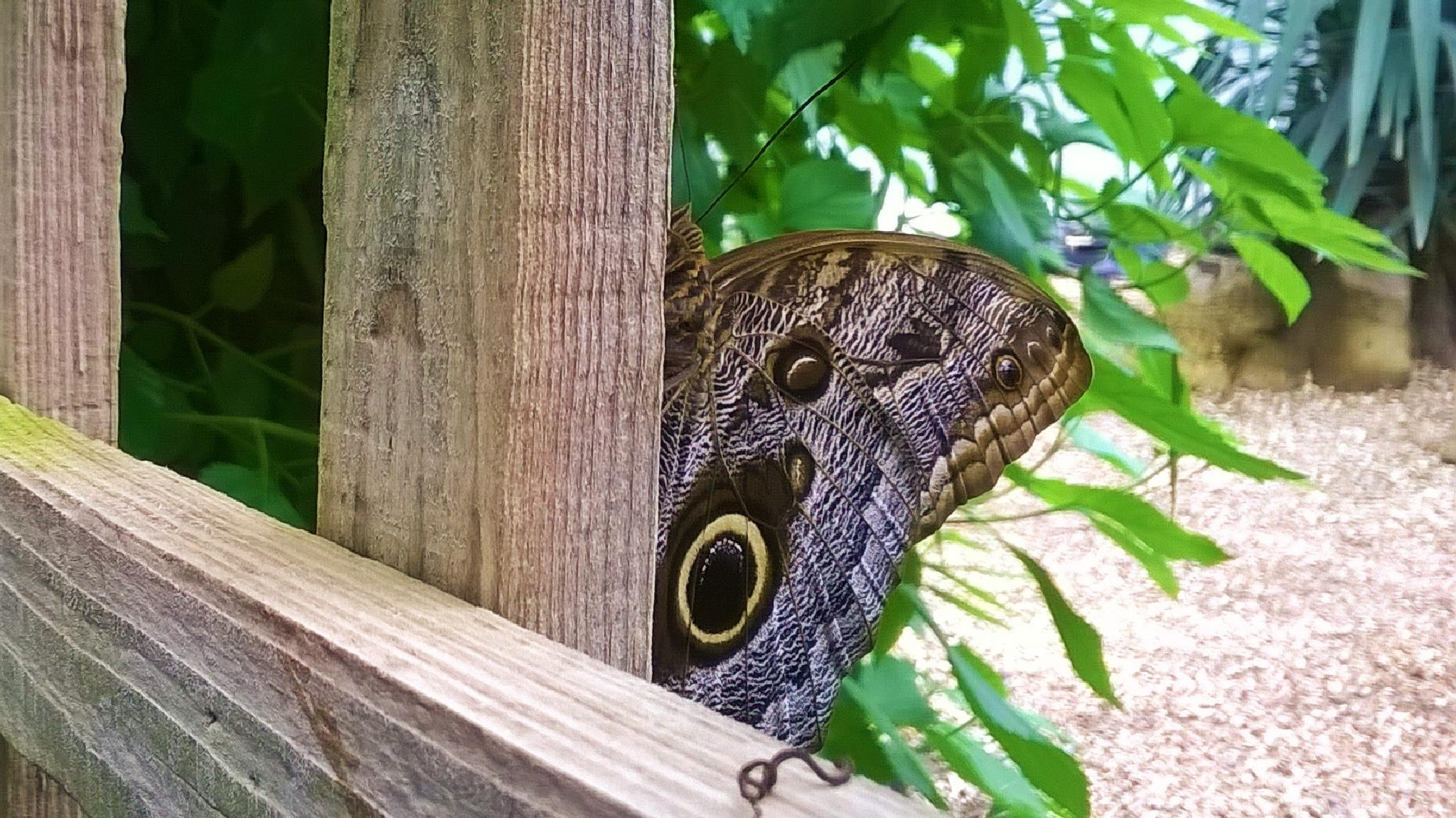 Photo in Animal #butterfly #animal #nature #uk #chichester #lumia #nokia