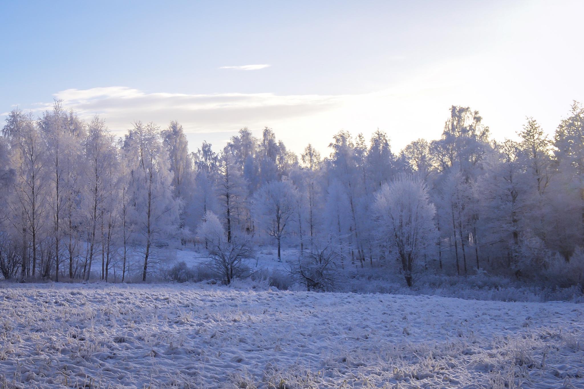 Sunny winterday. by michaeldahlen