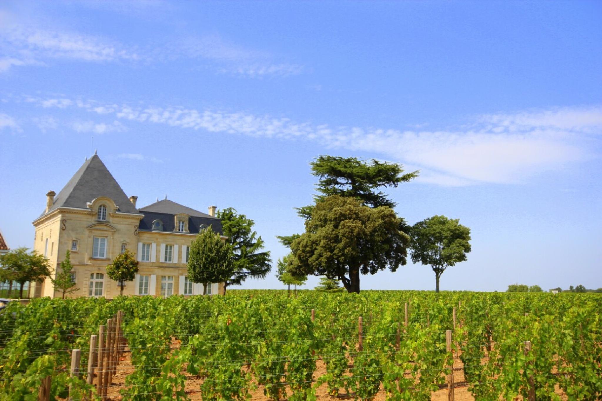 French Vineyard by danlandry69