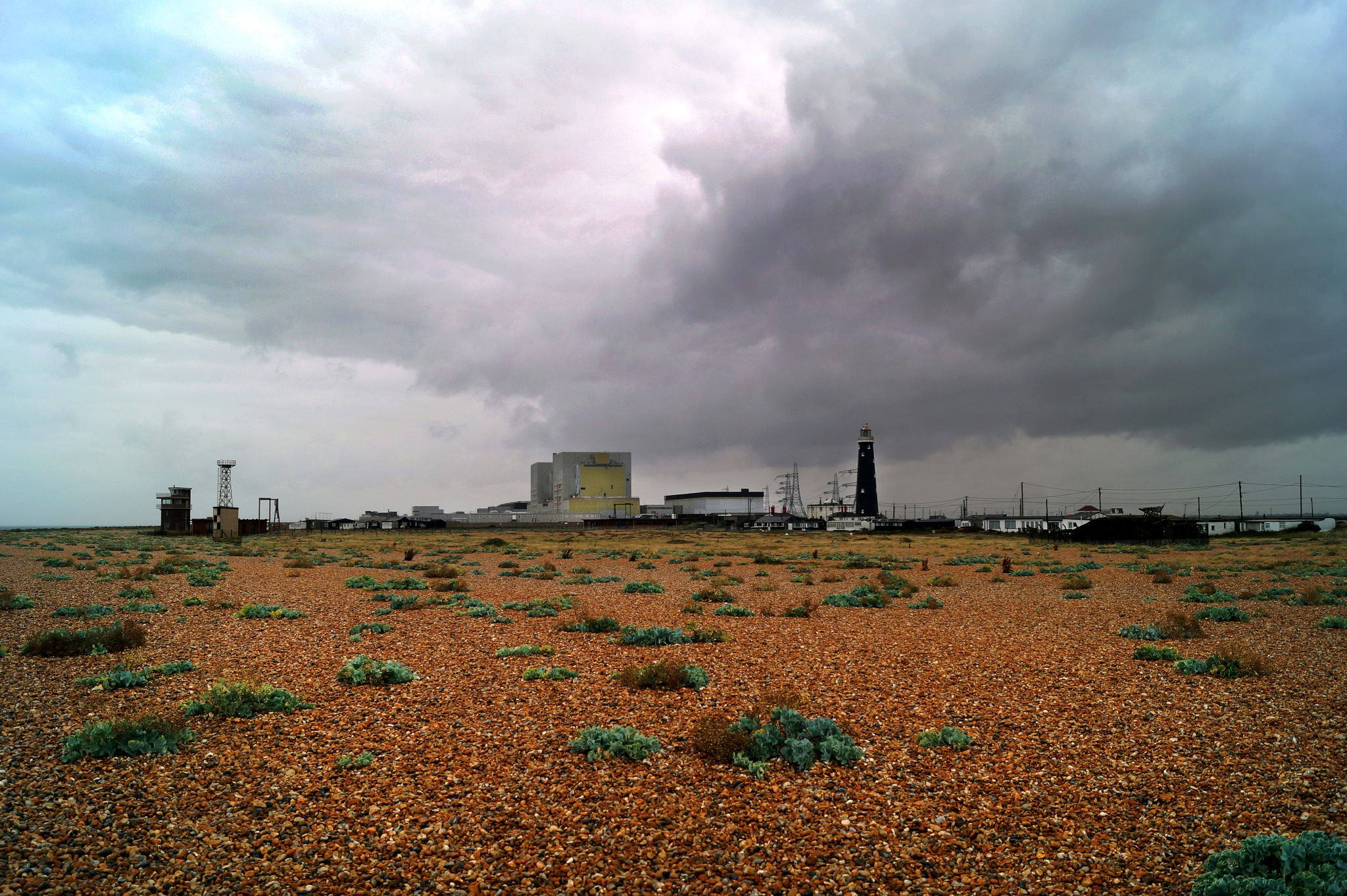 Dungeness by Nicky