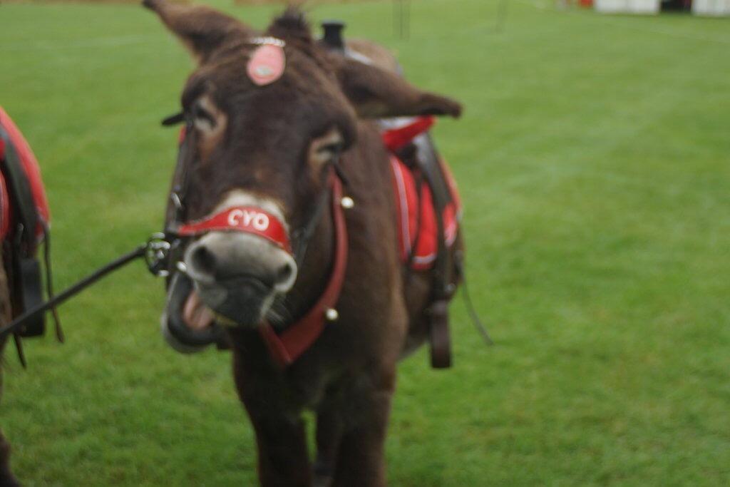 Laughing Donkey by erol.antz