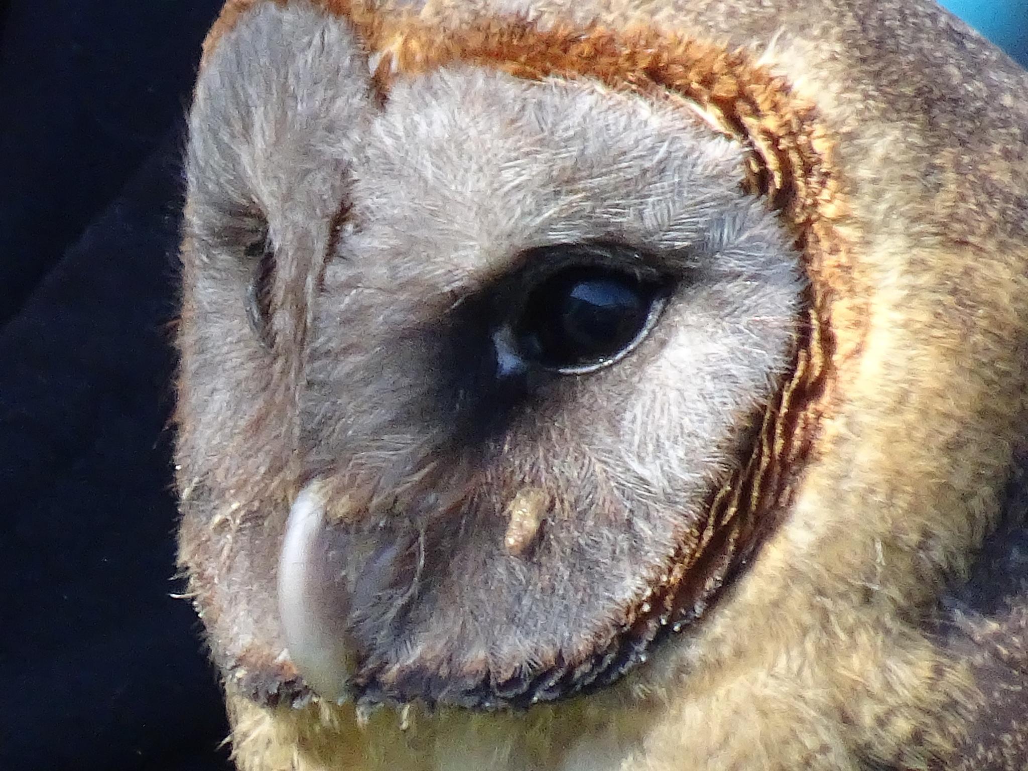 Owl by erol.antz