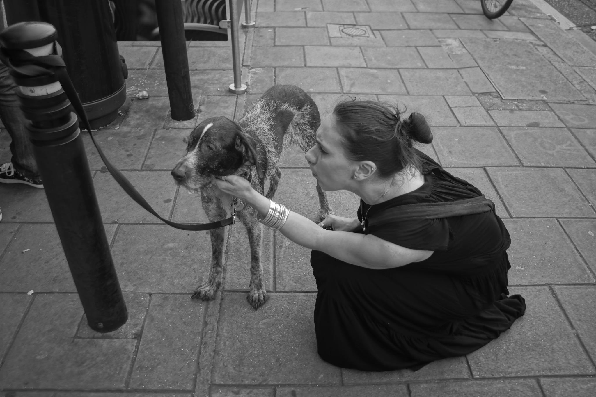 Pet the dog by erol.antz