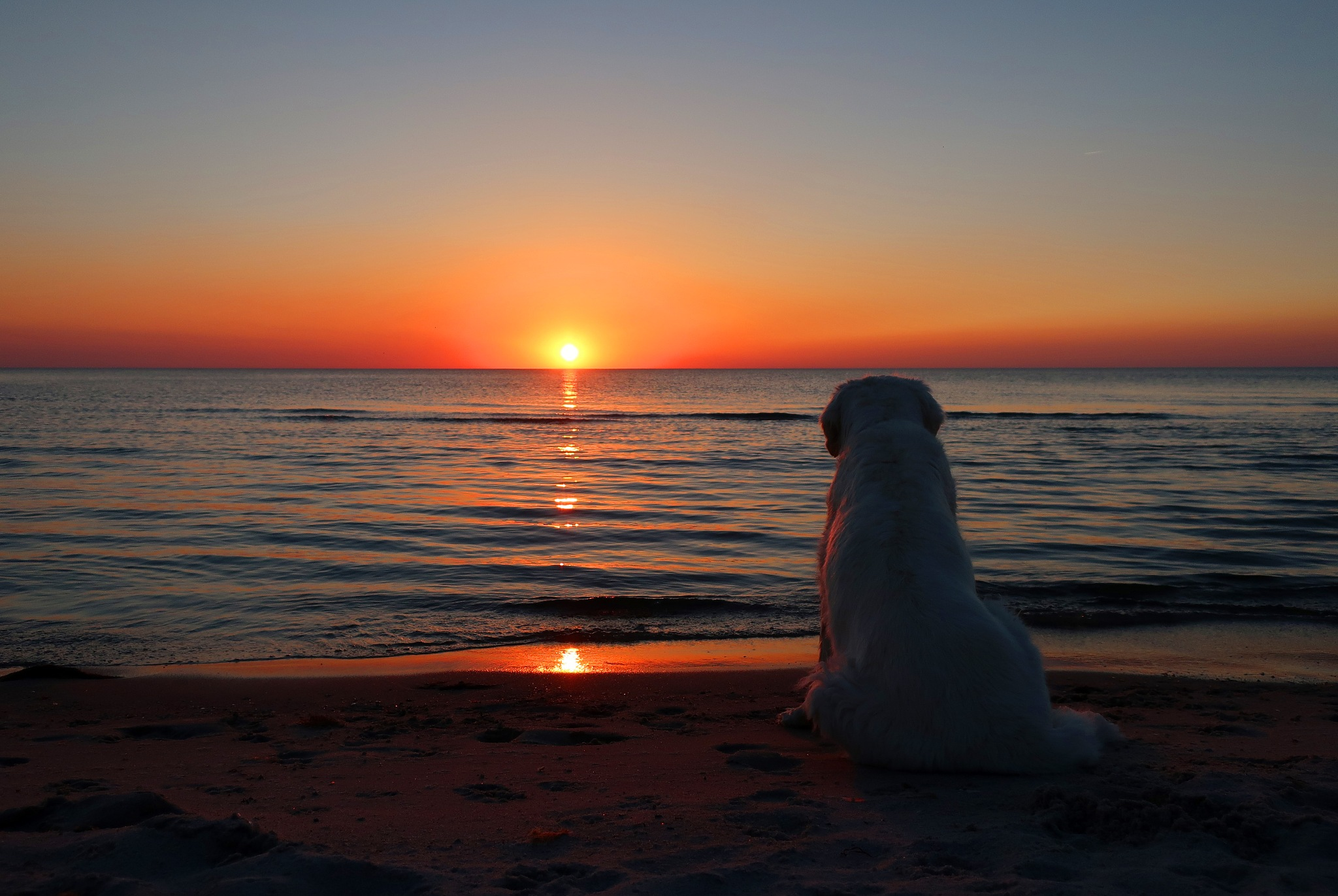 My dog loves beautiful sunsets by Ingrid Juul