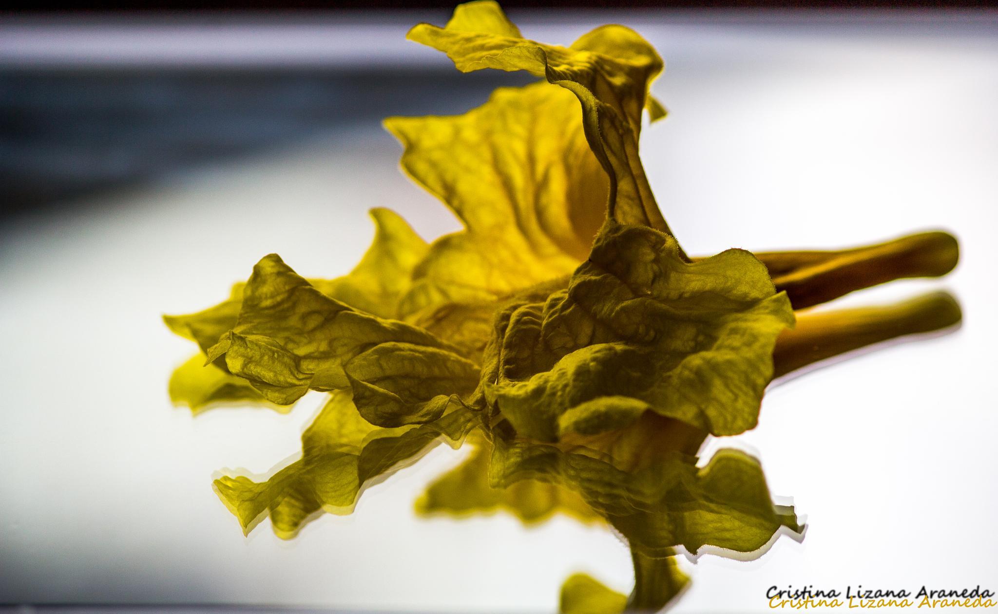 Flor de Araguaney by Cristina Lizana
