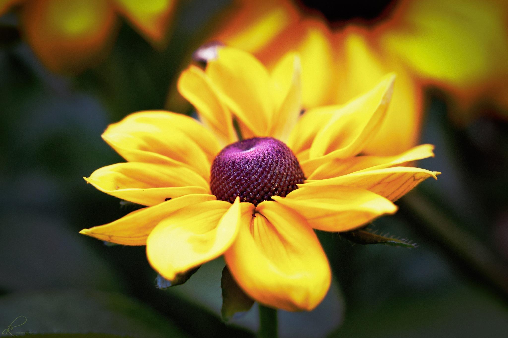 Photo in Nature #flower #nature #yellow #bright