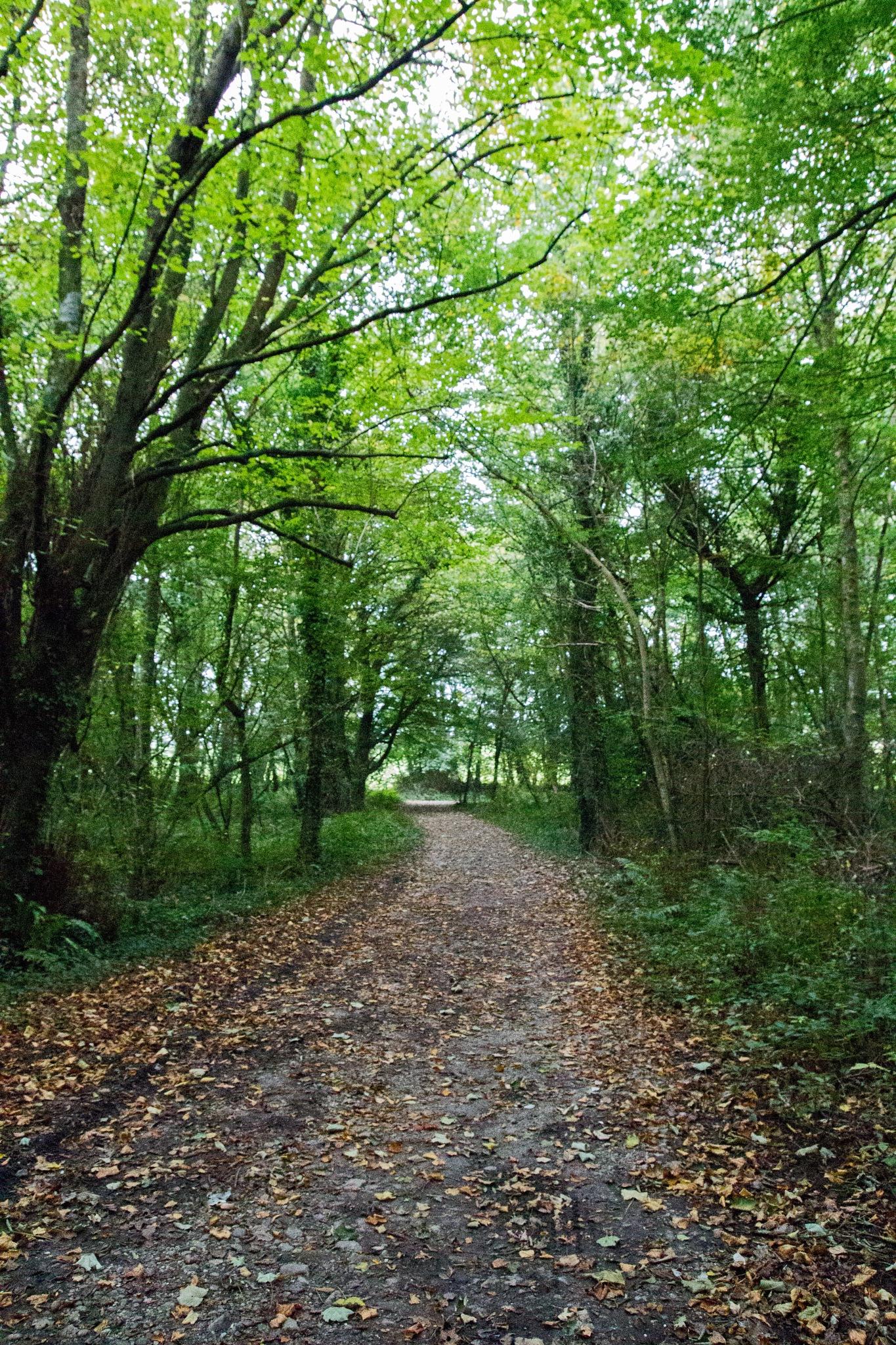A walk through the trees by ronita.barwell