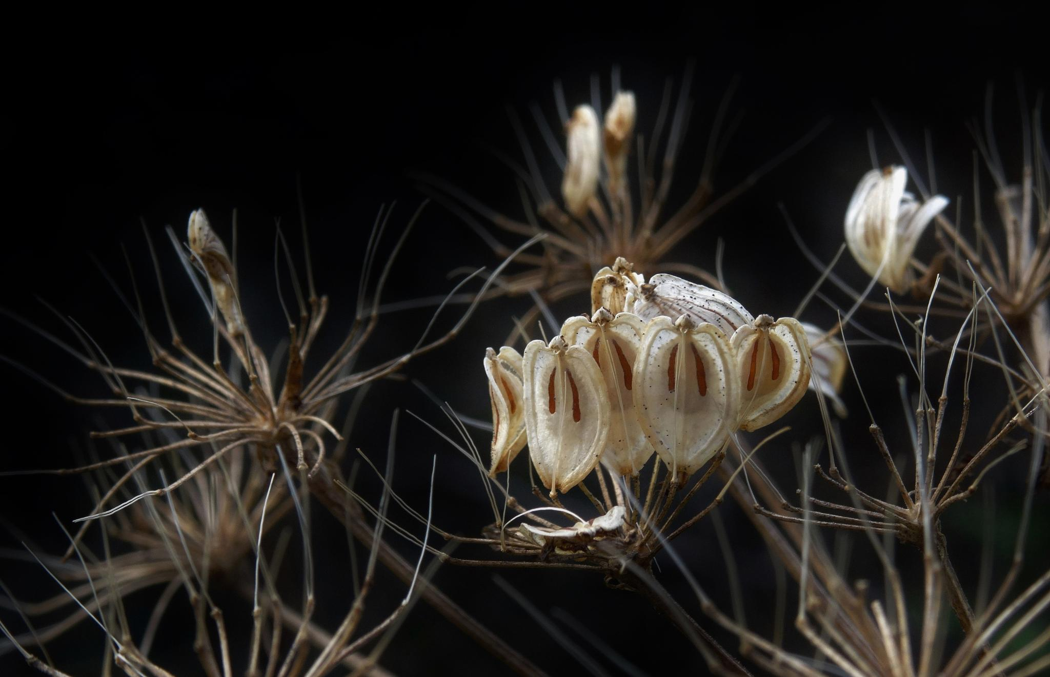 Wild Seed Heads by elizabeth.cooksey.3