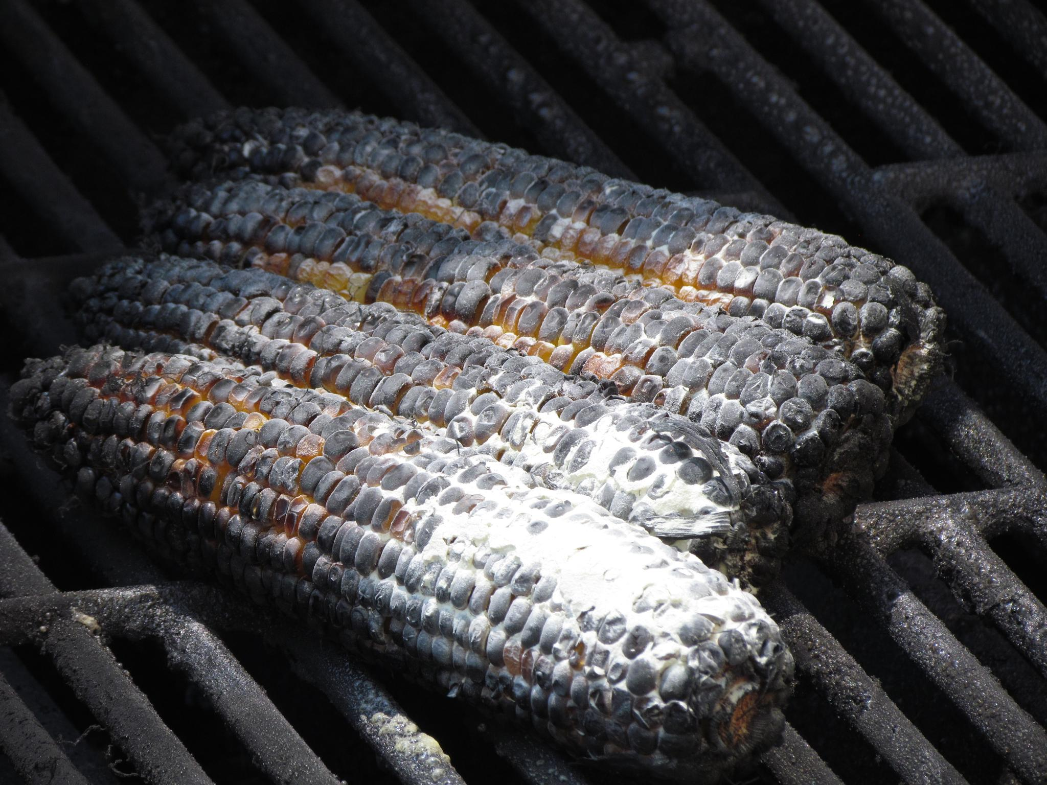 Burnt Corn by jaisikand