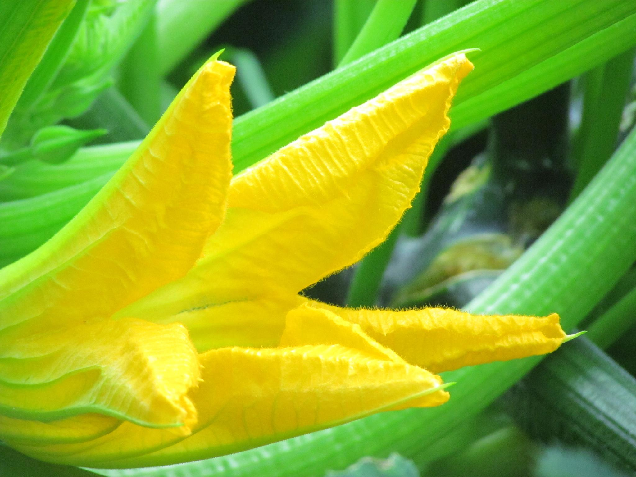 Yellow Flower. by jaisikand