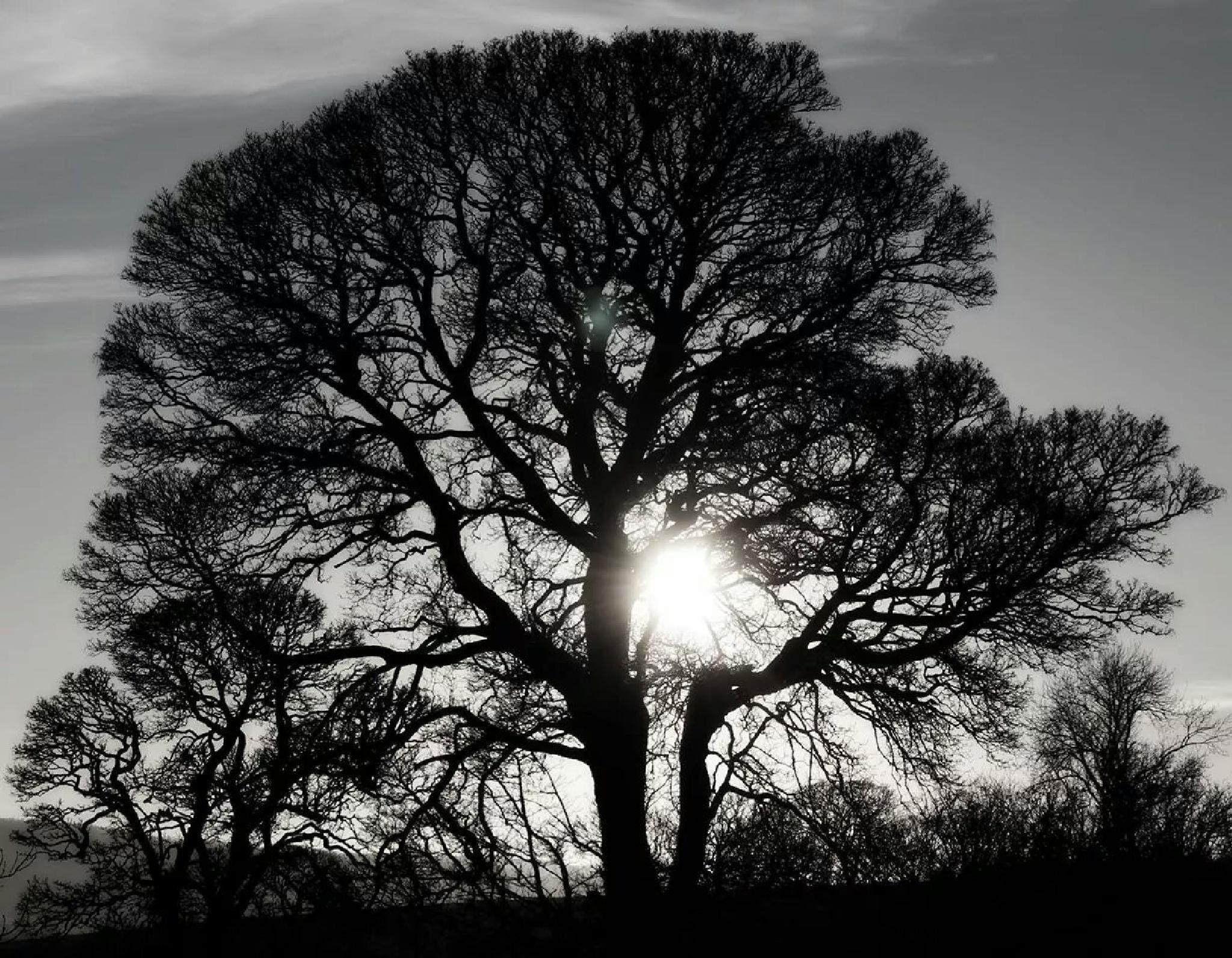 sun through Tree  by ged.hepburn