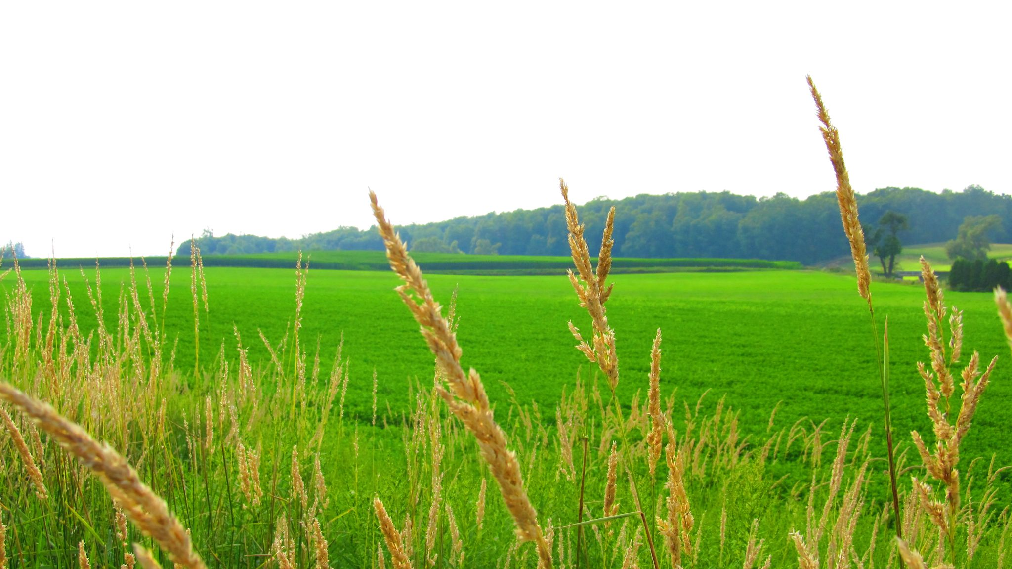 Green Field by simonp