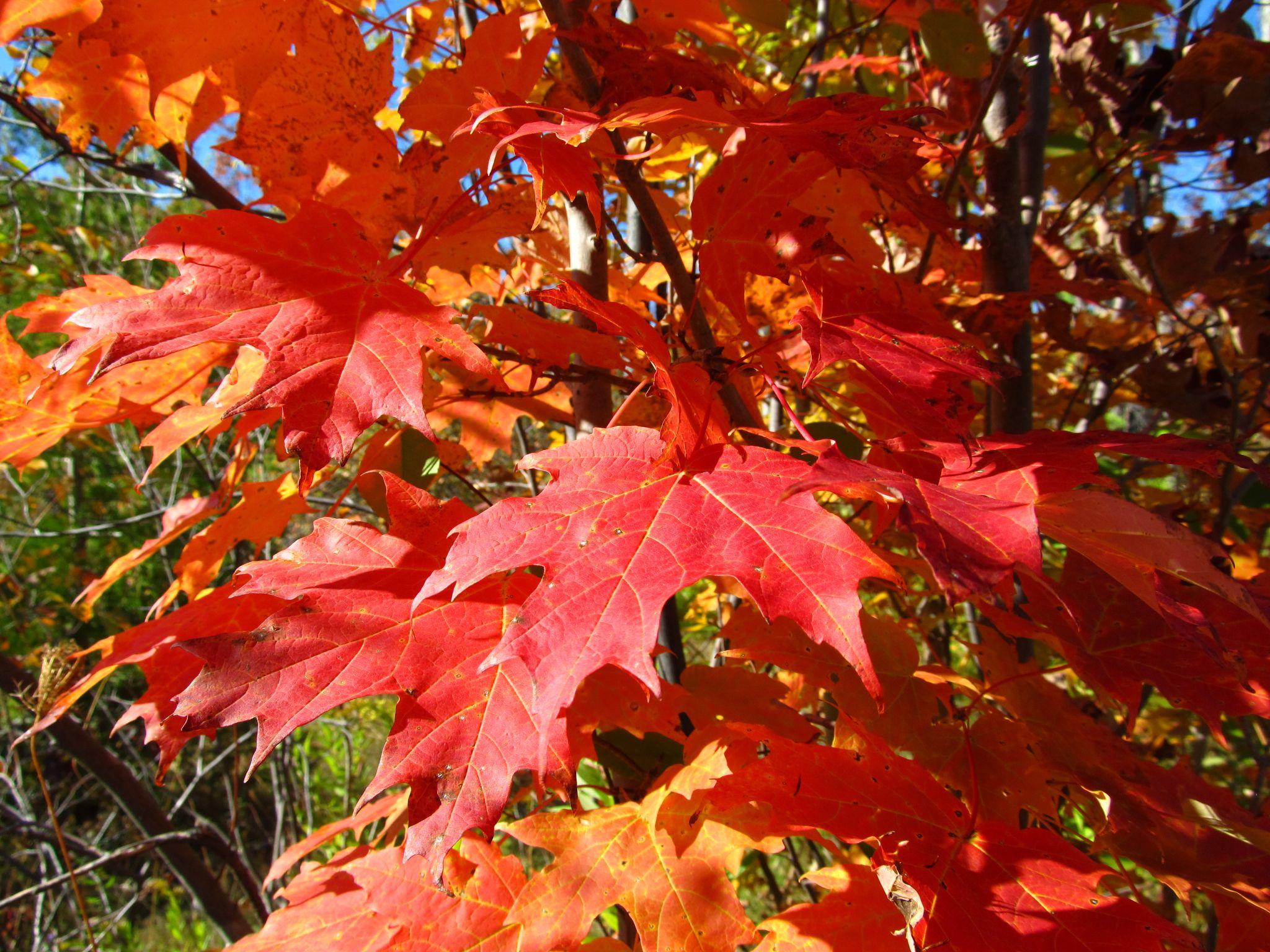 Fall Colors by simonp