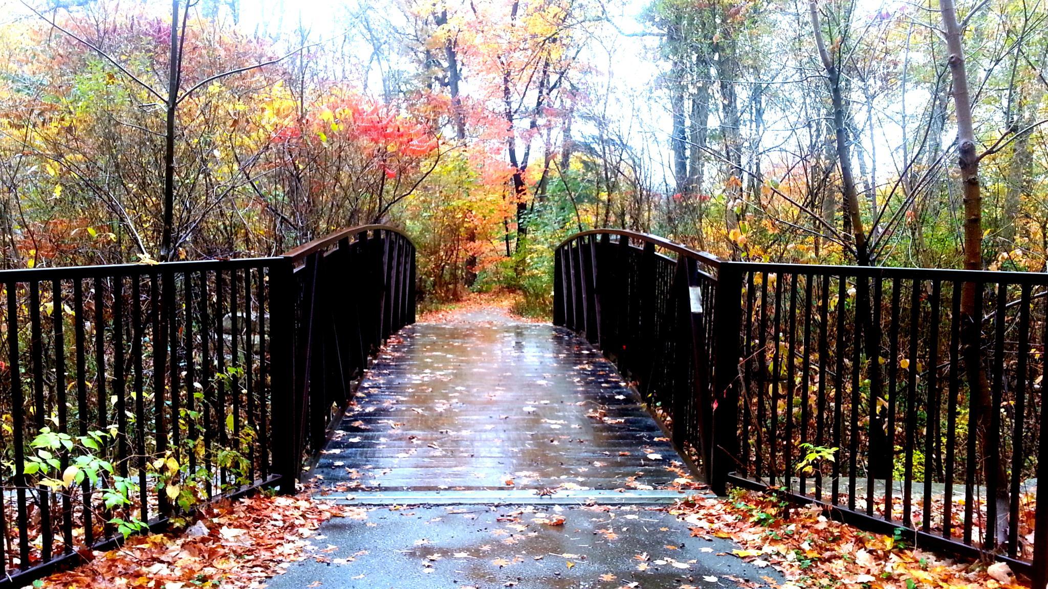 Photo in Nature #colors #bridge #trees #fall