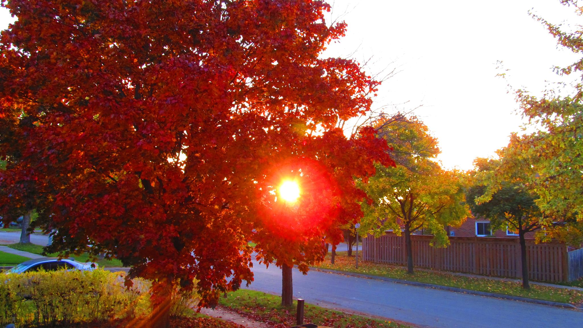 Morning Sunrise by simonp