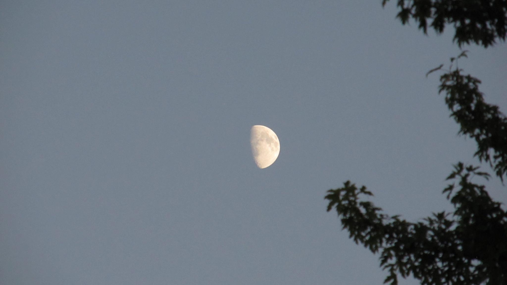Half Moon 2 by simonp