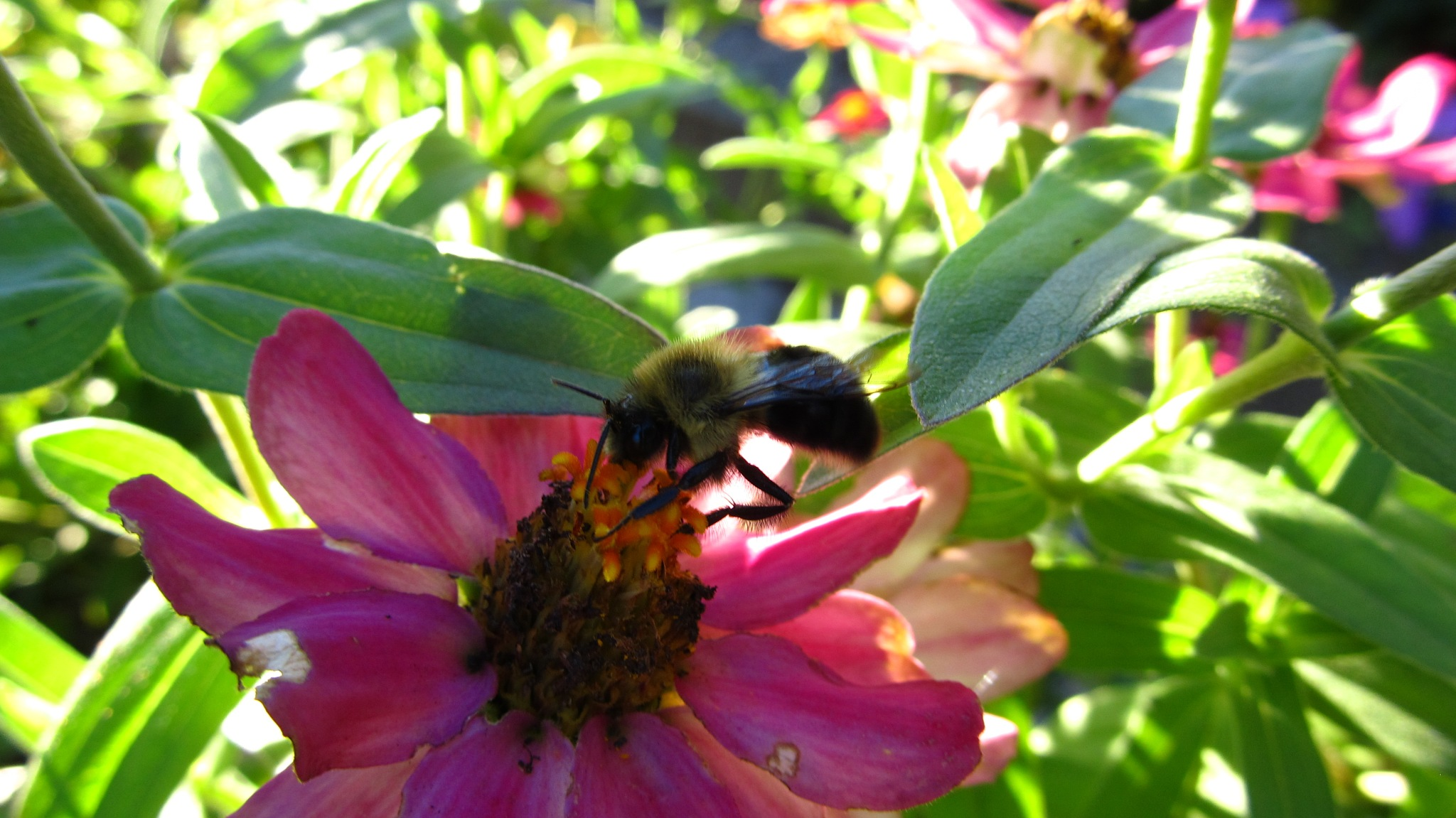 Flower and Bee by simonp
