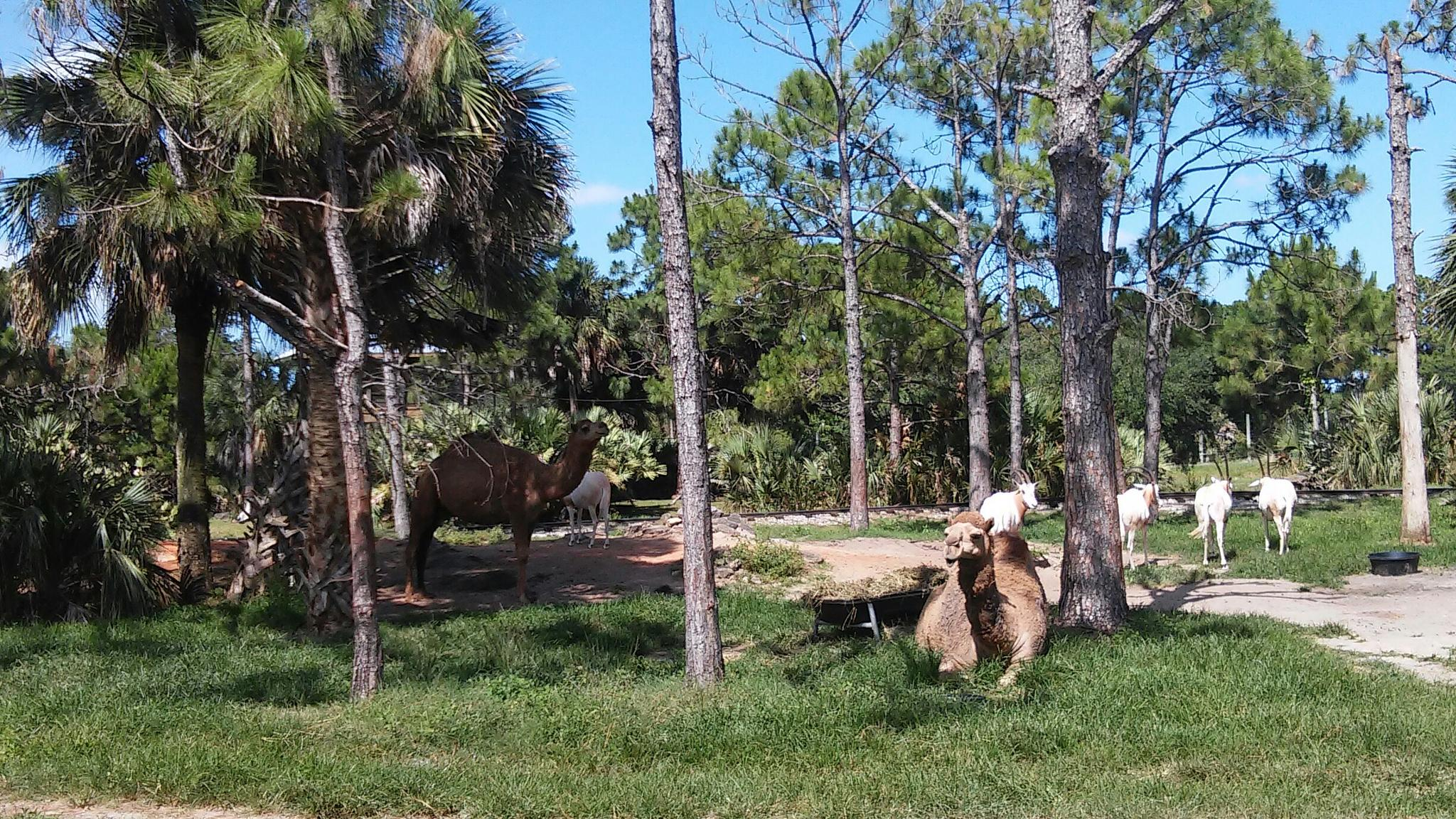 Brevard Zoo in Melbourne, FL USA by grannypam