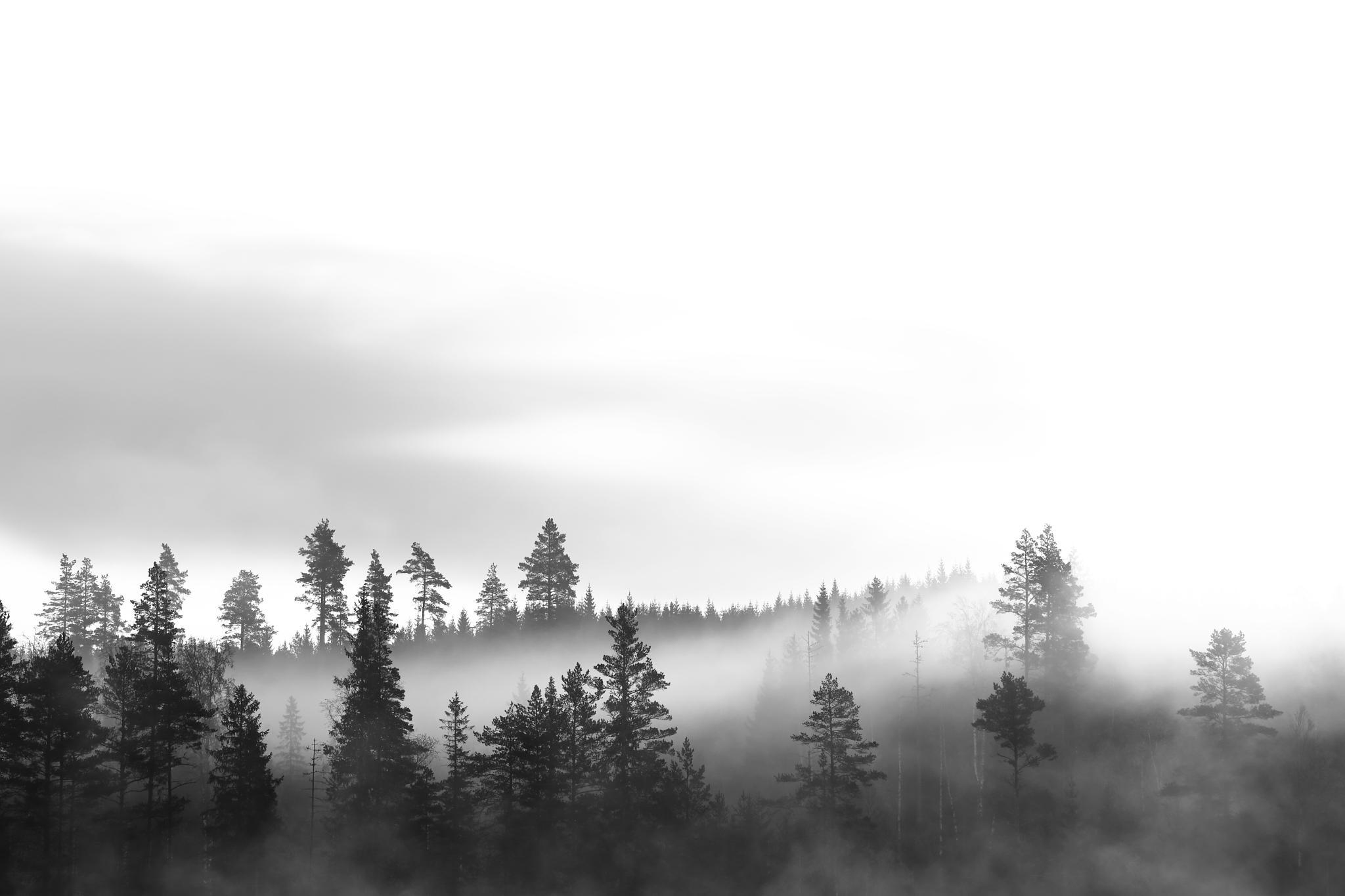 The landscape in B&W by SRFOTO