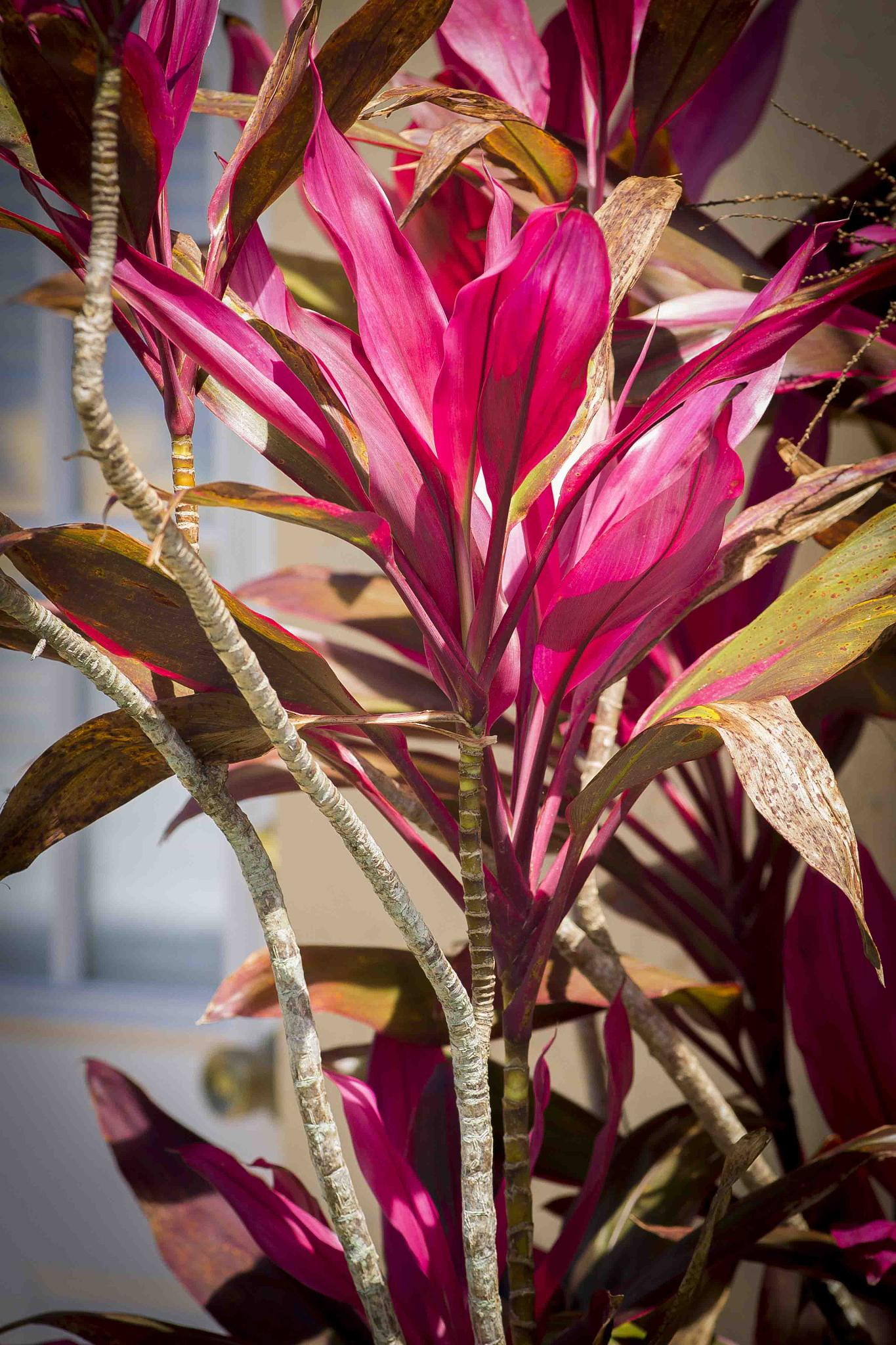 Florida Pinks  by Matt Wolbert Photography