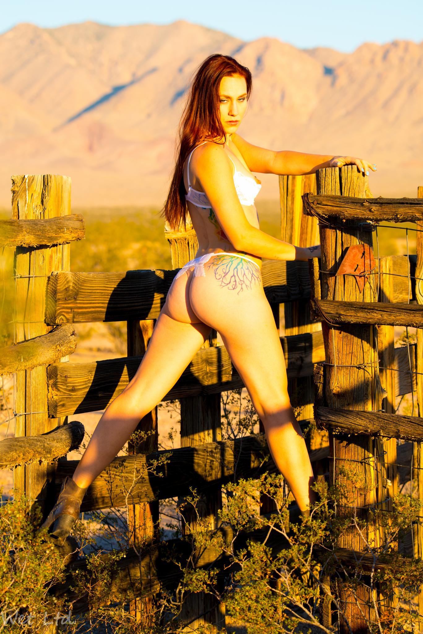 Fenced in Morning Light by jeffwetltd