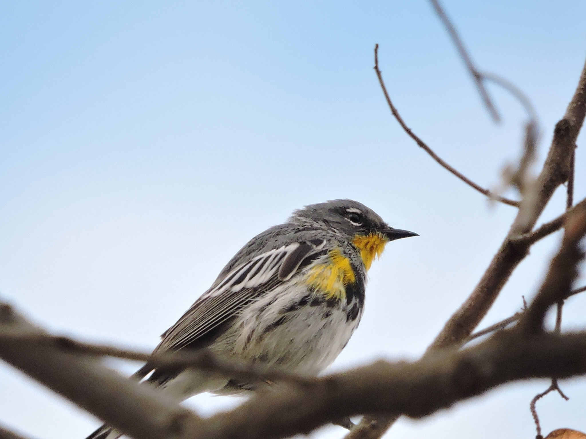 Warbler on a Winter Day by ralph.s.carlson