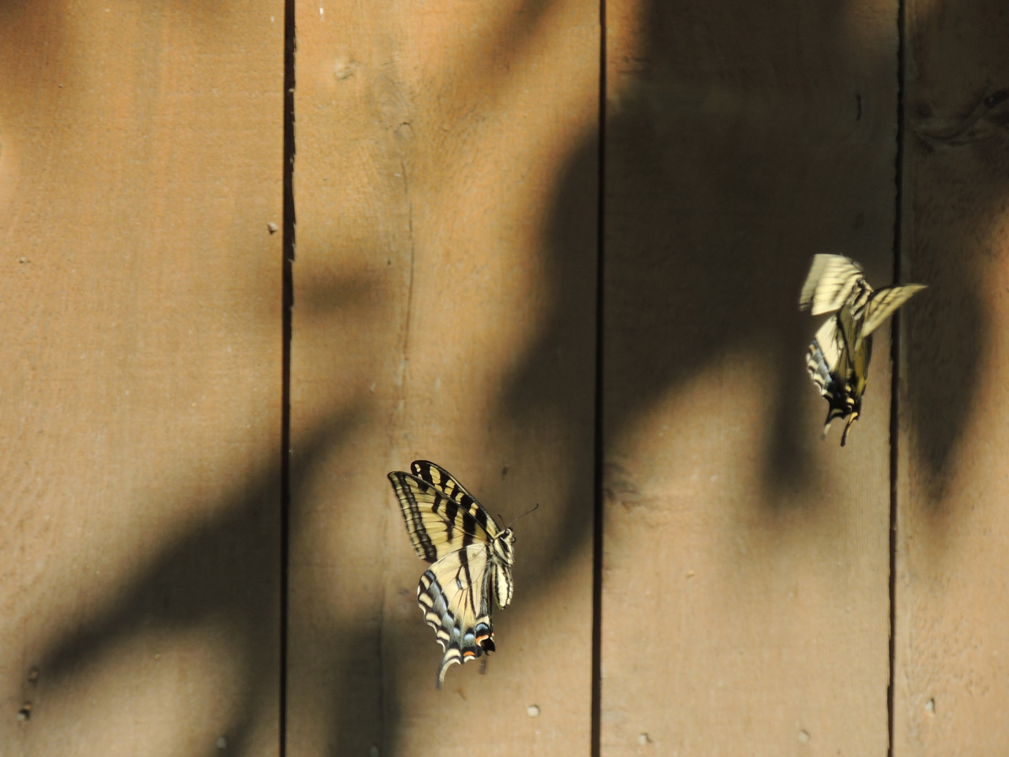 Fluttering By by ralph.s.carlson