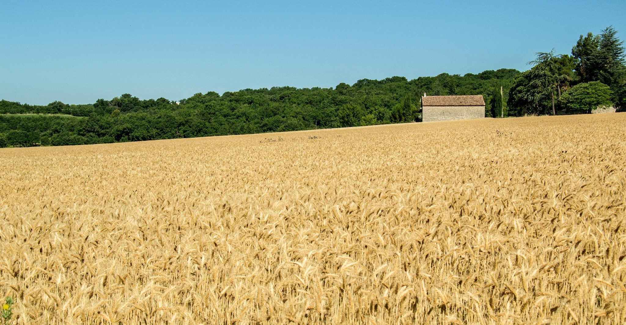 Campi di grano by pierpa63