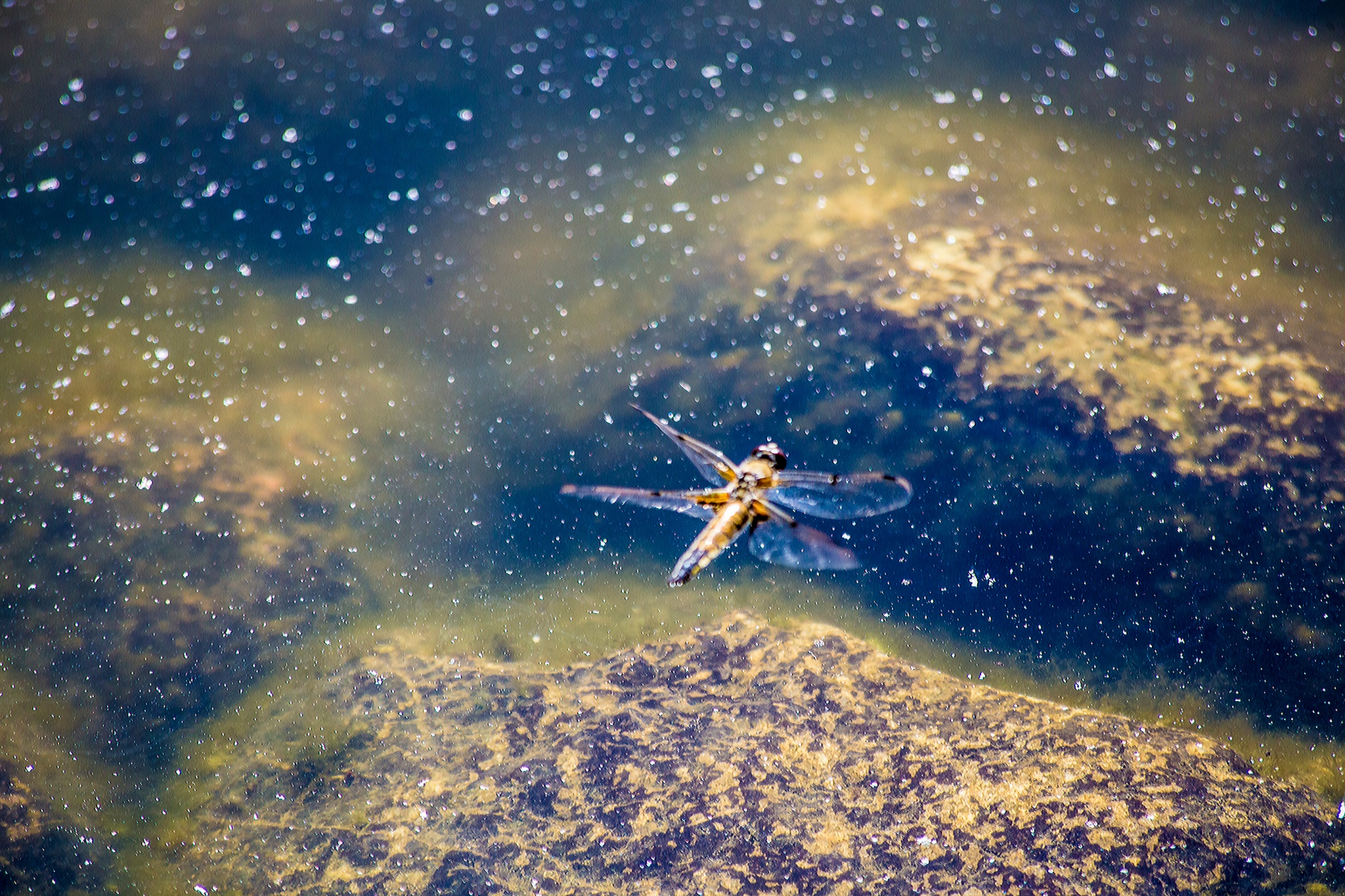 Dragonfly by MaxBSimic