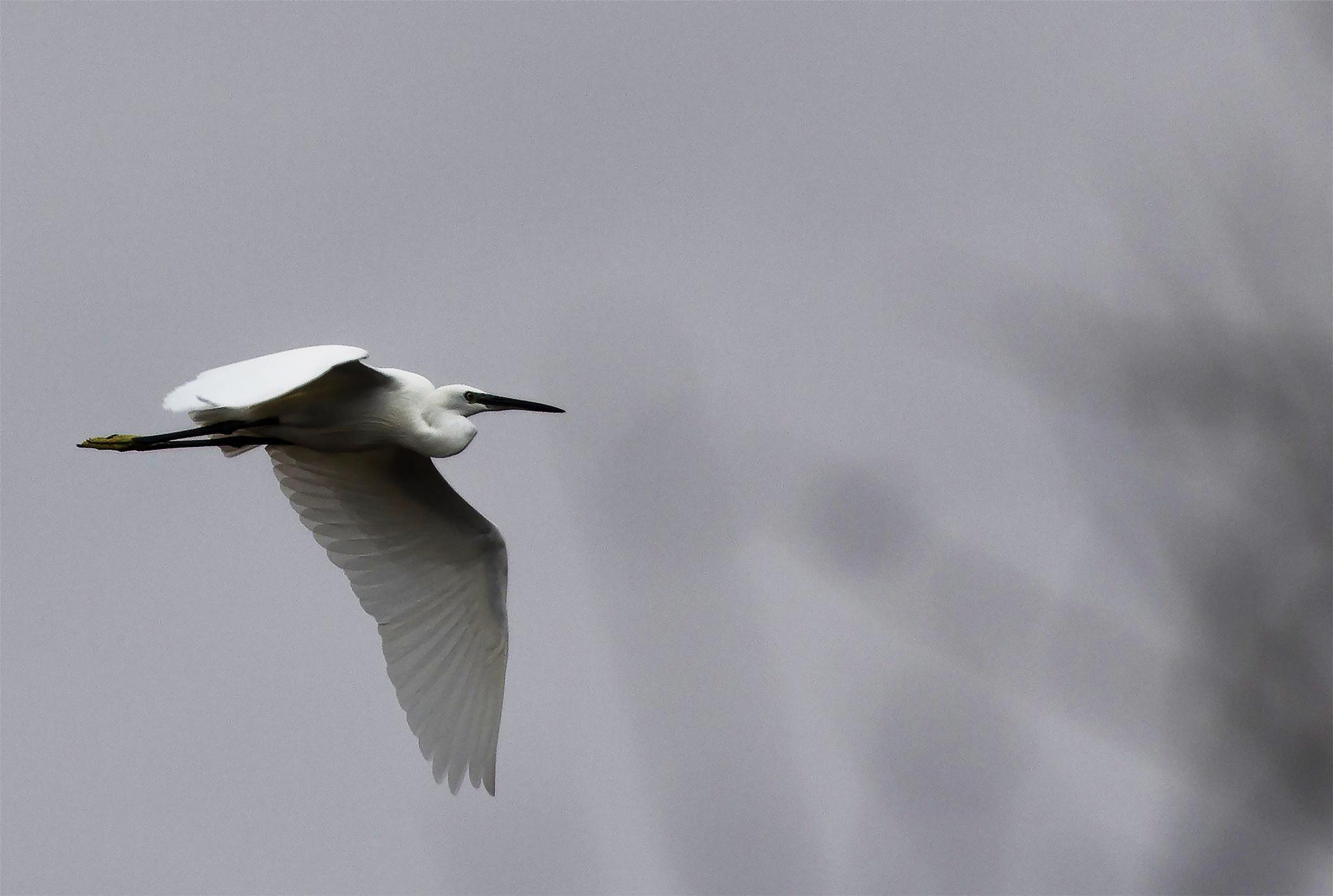 Heron by MaxBSimic