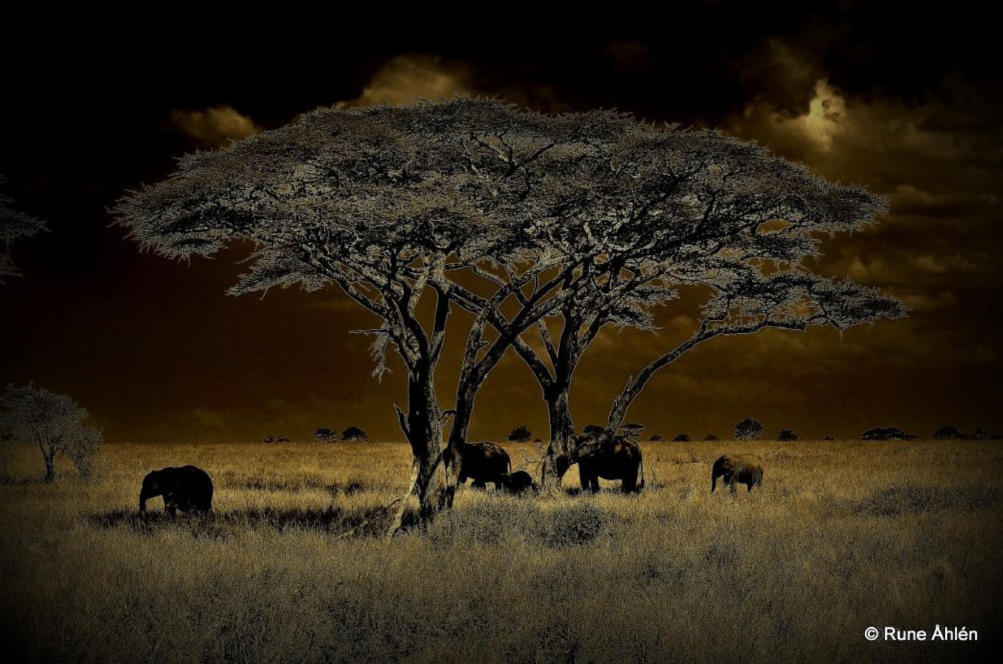Mörka Afrika! by rune.ahlen.7