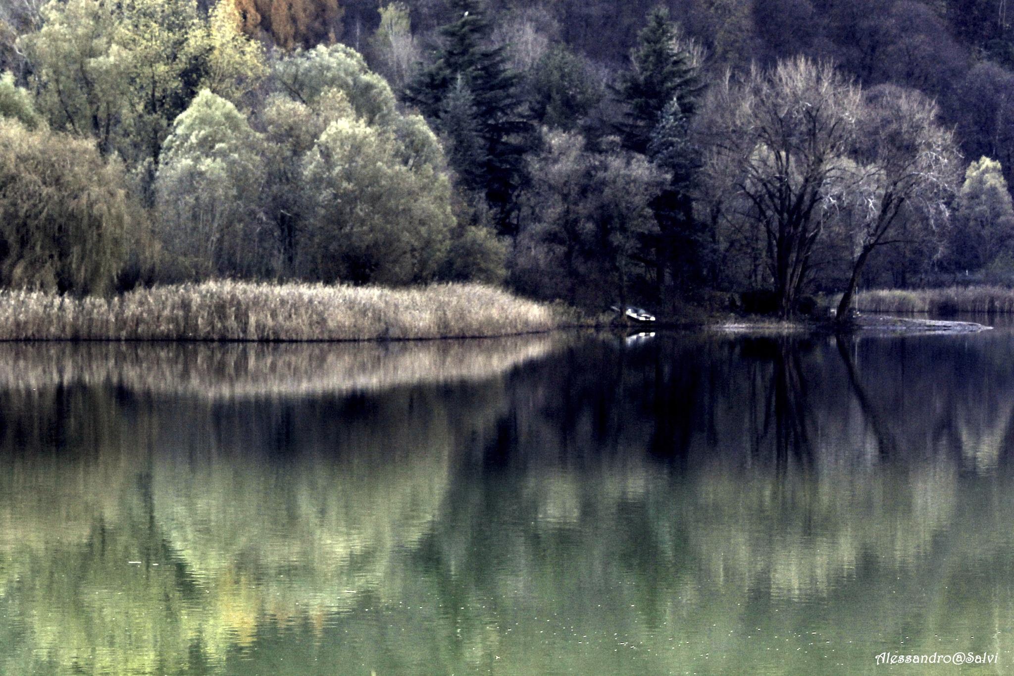 riflessi d'autunno by Alessandro Salvi
