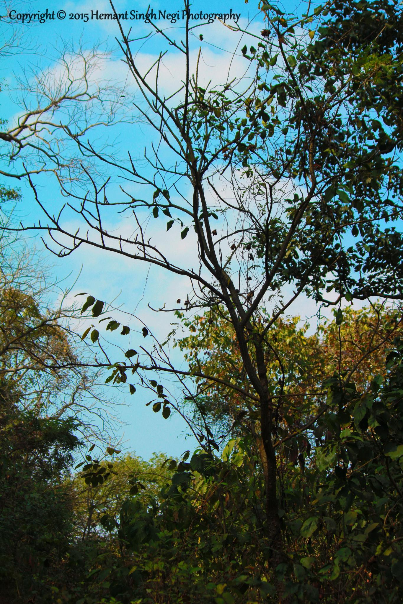 The Blues by HEMANT SINGH NEGI