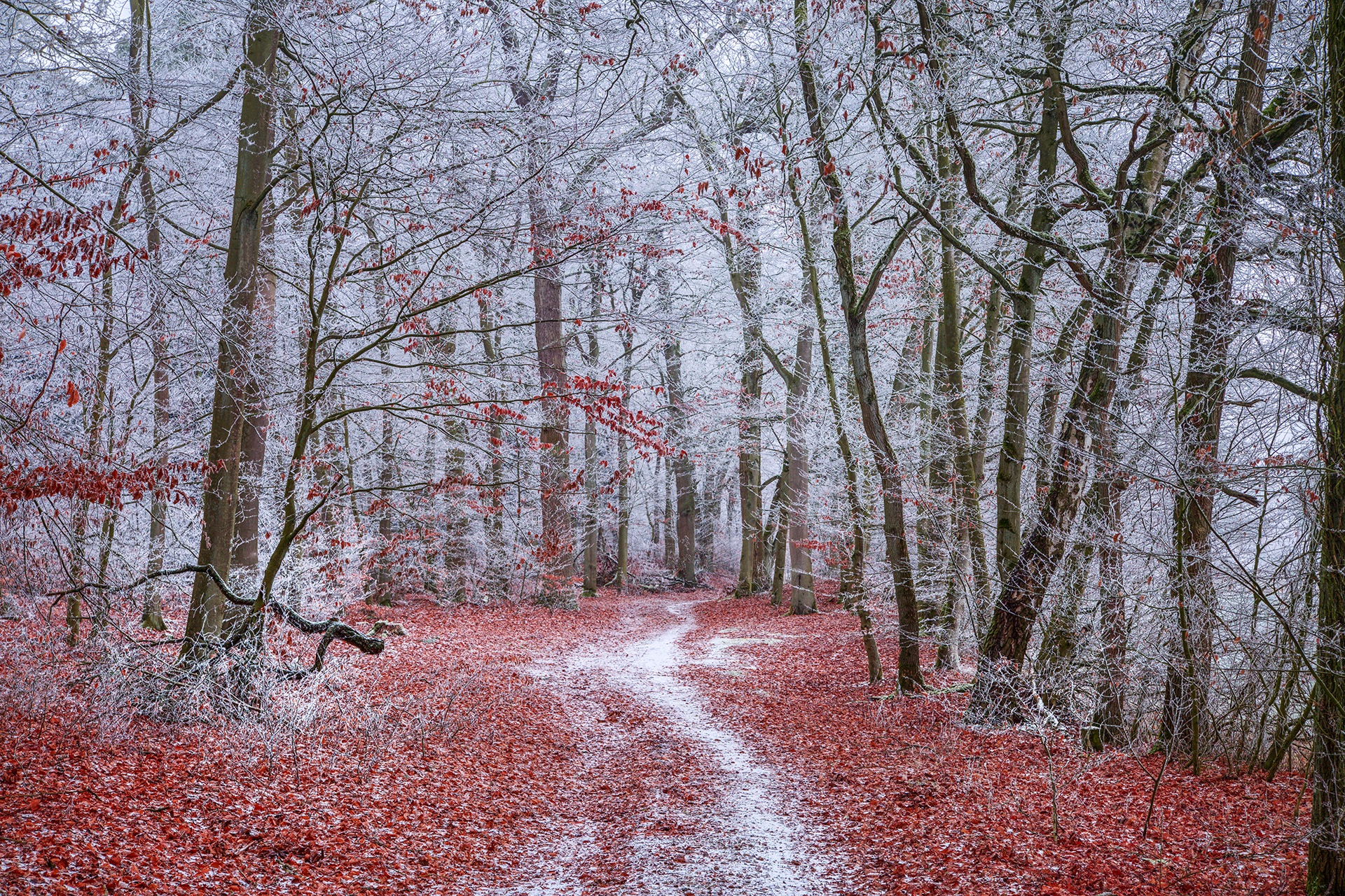 Photo in Nature #winter #forest #frozen #leaves #nature #landscape #seybruch #dannenberg #wendland #germany #2019