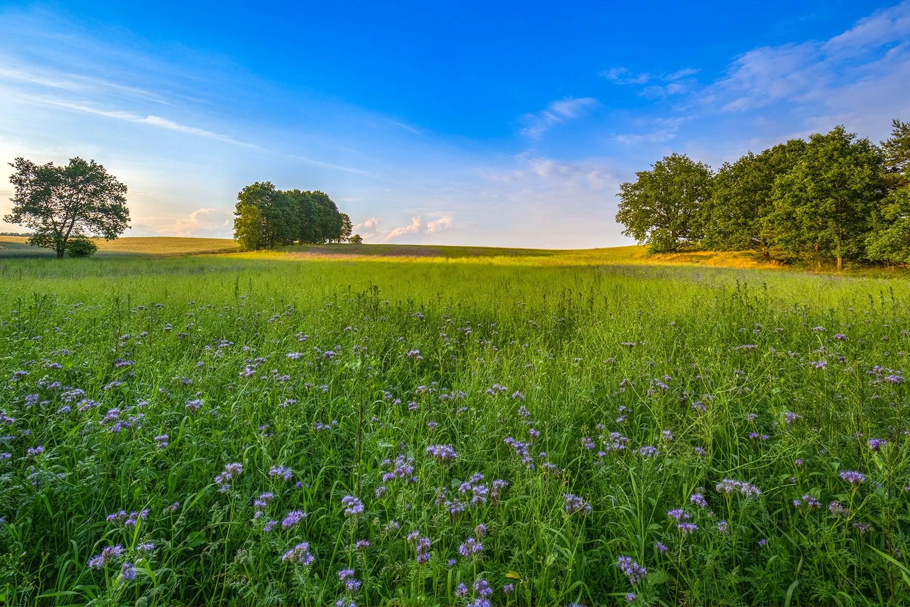 A beautiful summer day by Maik Richter Photography