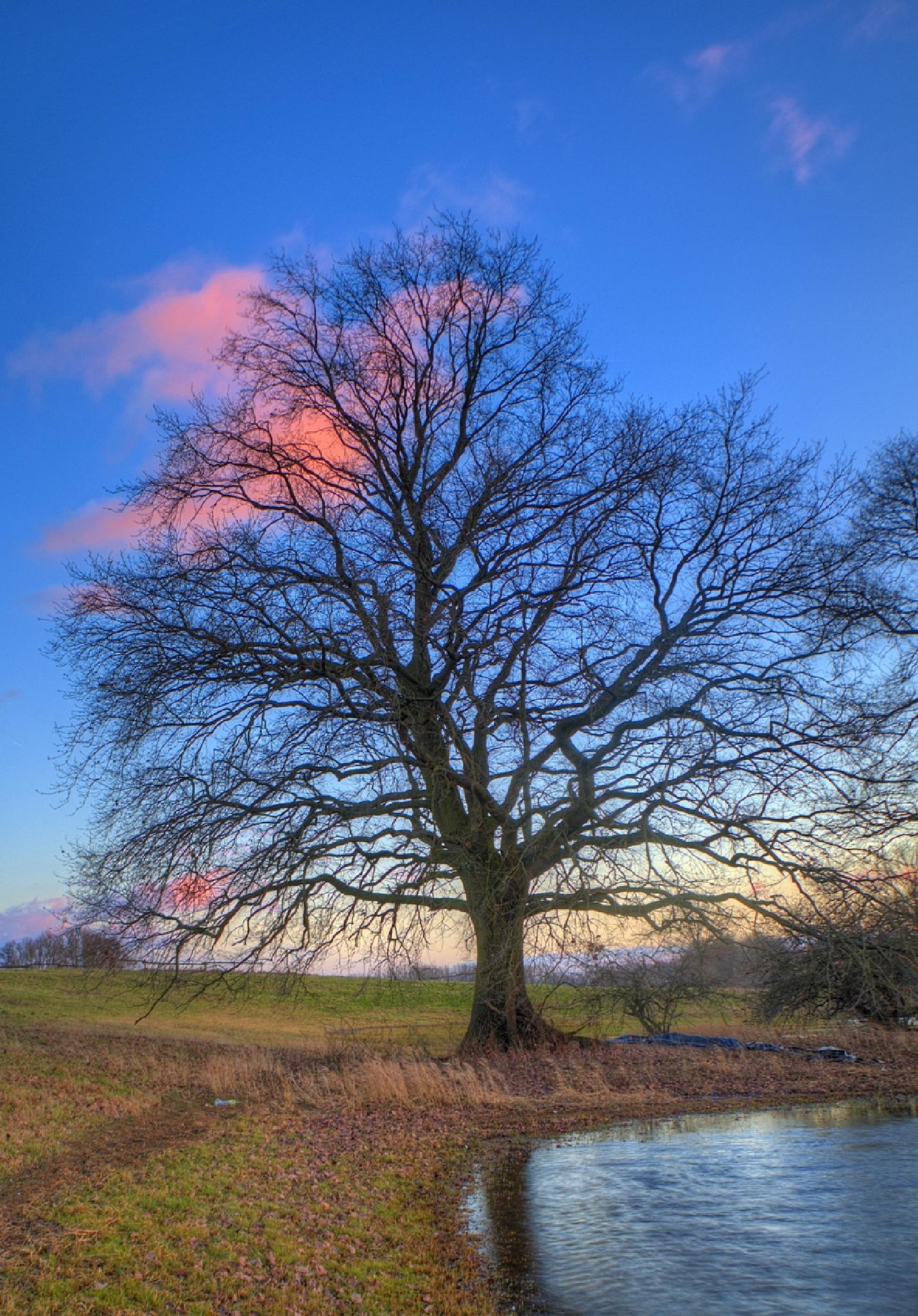 Winter Oak by Maik Richter Photography