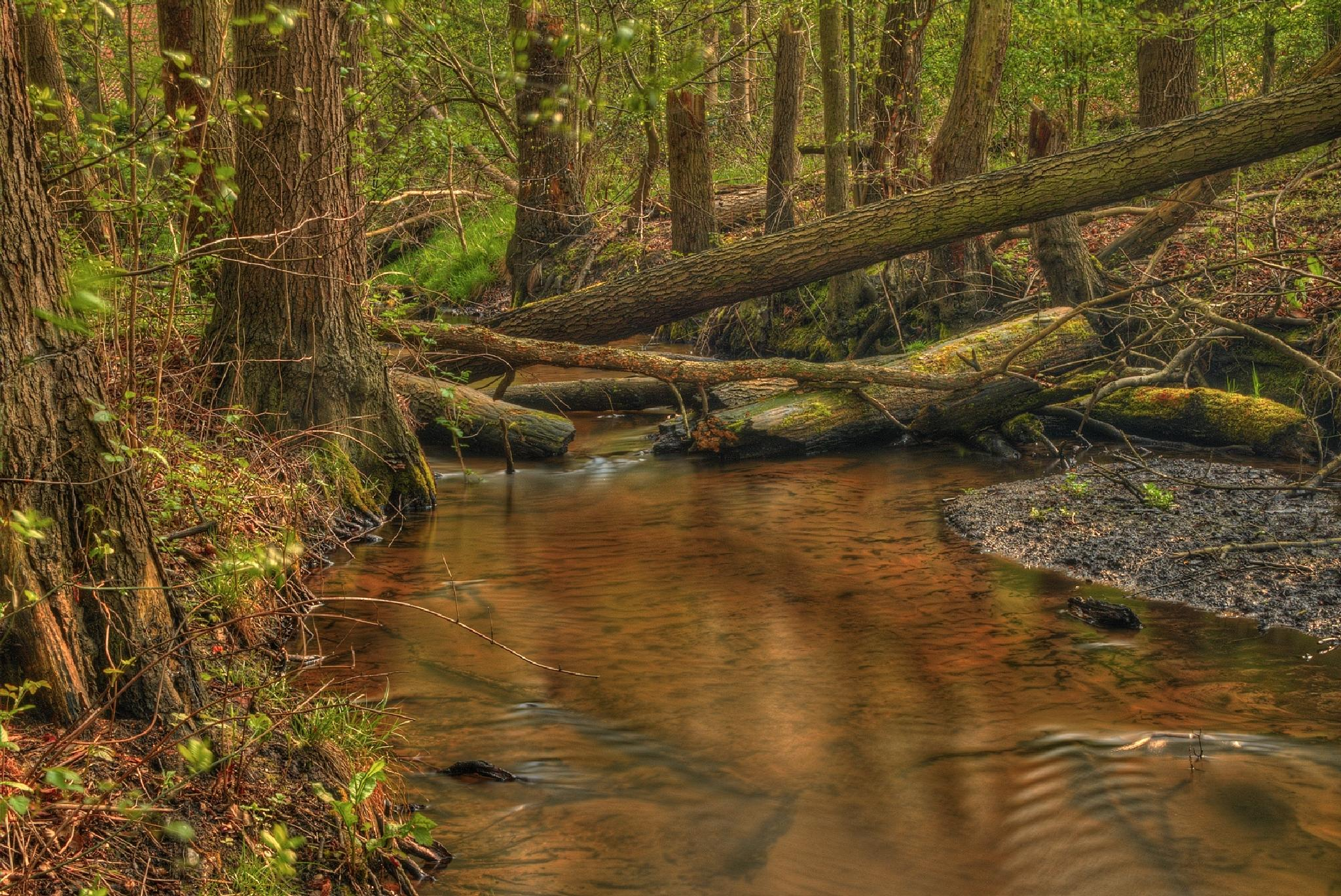 Mill Brook by Maik Richter Photography
