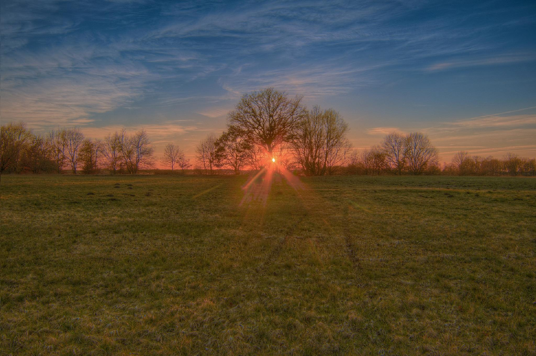 Photo in HDRI #hdr #landscape #sunset #sun #sun rays #clouds #oak #tree #meadow #fields #dannenberg #prabstorf #germany #2015 #canon