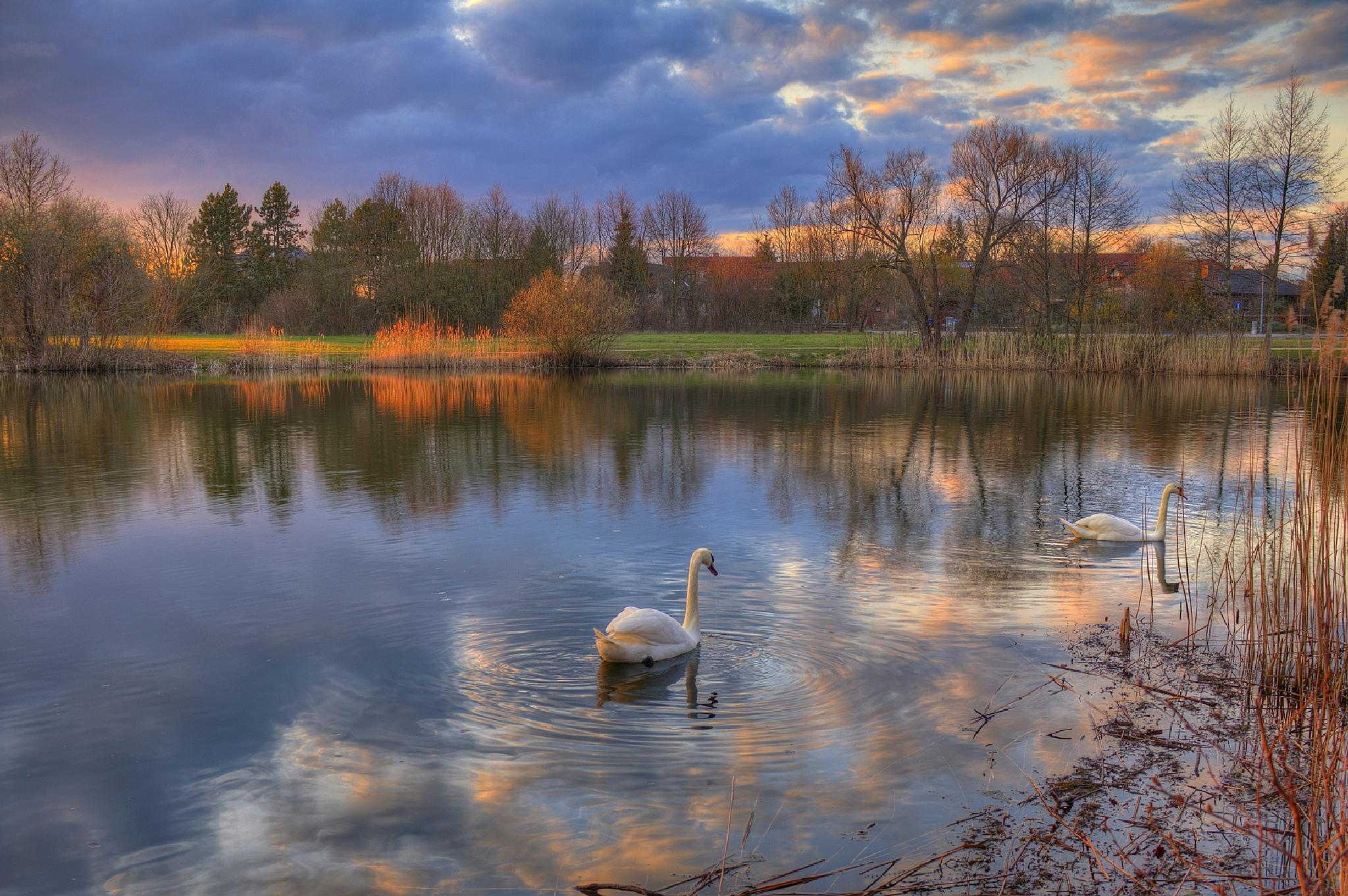 The way of the swans by Maik Richter Photography