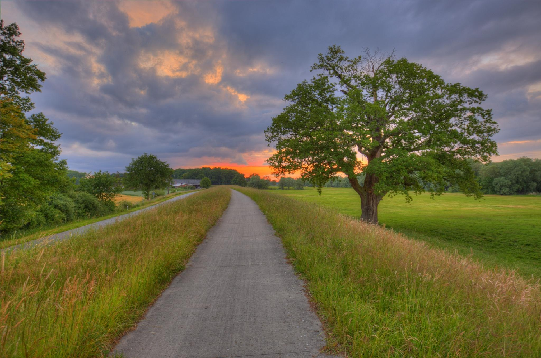 The oak on the dike by Maik Richter Photography