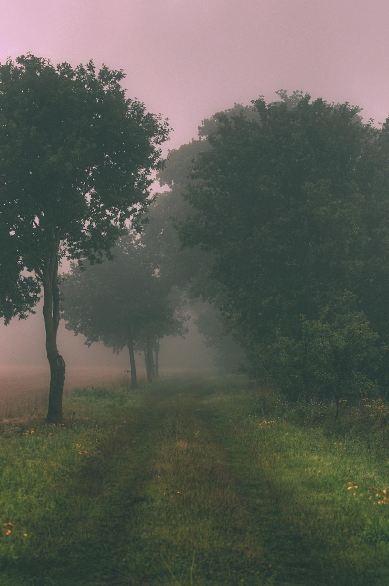 foggy tales by Maik Richter Photography