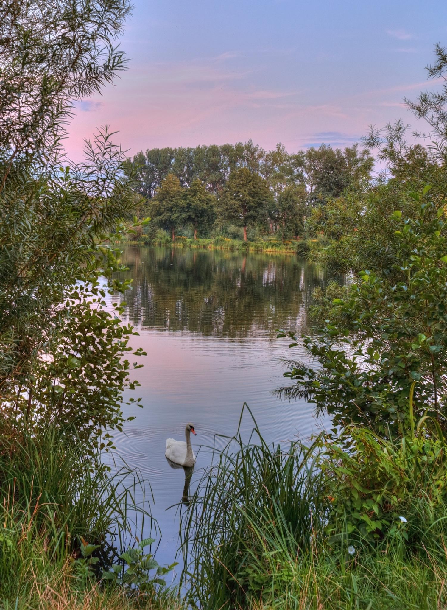 Swans like it to be photographed on Saturdays! ;-) :P by Maik Richter Photography