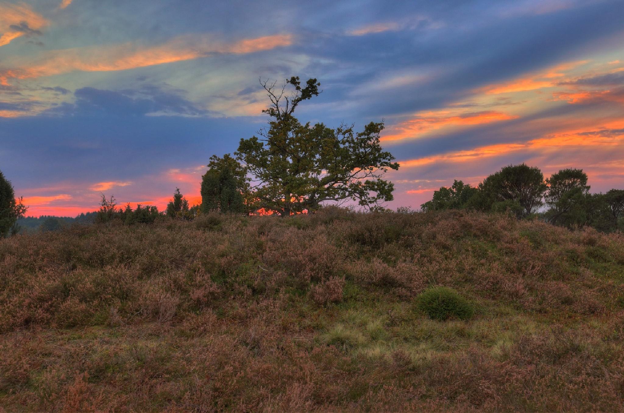 Abends in der Lüneburger Heide by Maik Richter Photography