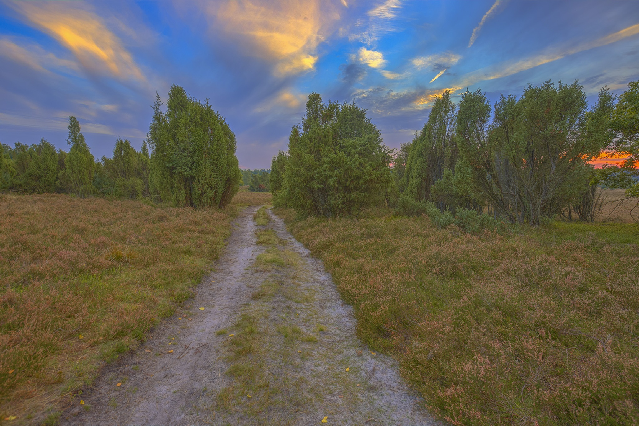 Heathland Walk 2 by Maik Richter Photography