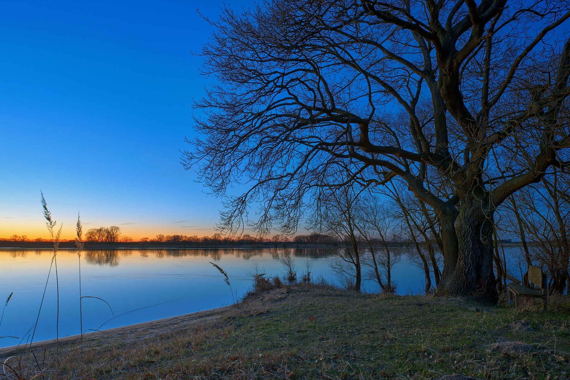 The oak on the river bank by Maik Richter Photography