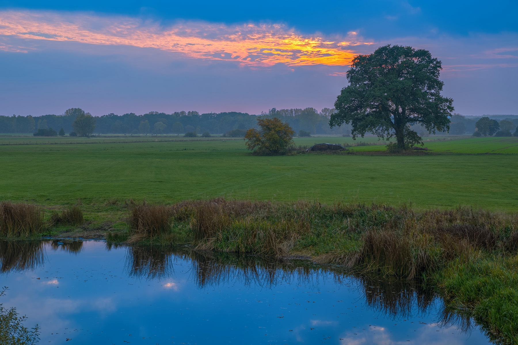 Old oak in the meadow landscape by Maik Richter Photography