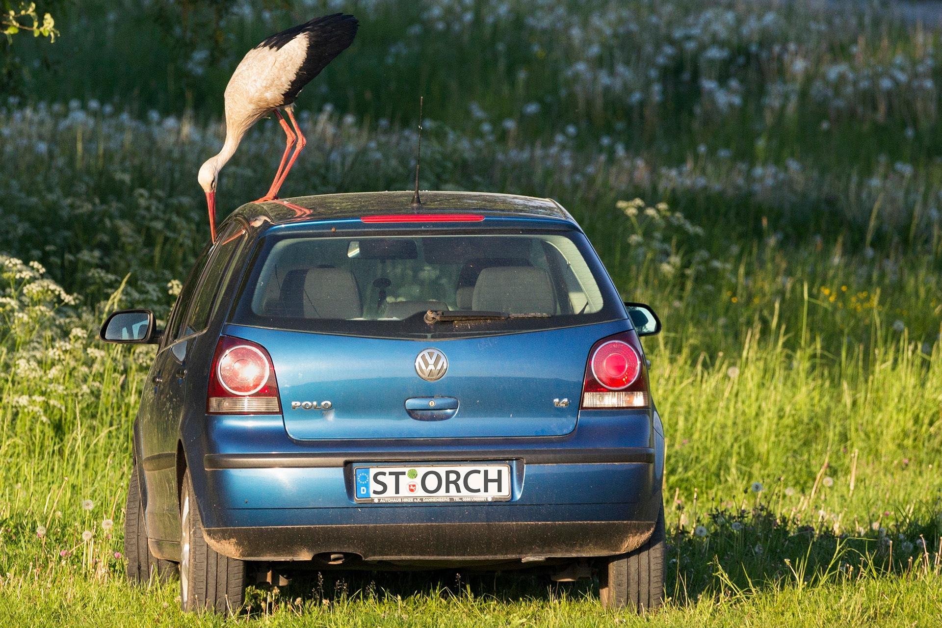 Stork on a car 3 by Maik Richter Photography