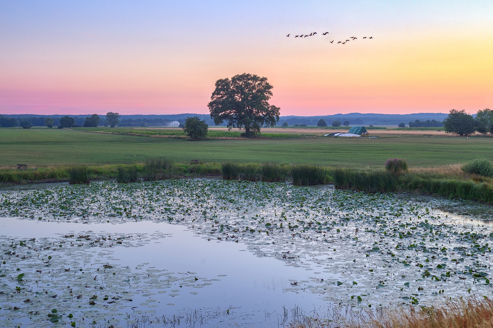 July meadow scenery by Maik Richter Photography
