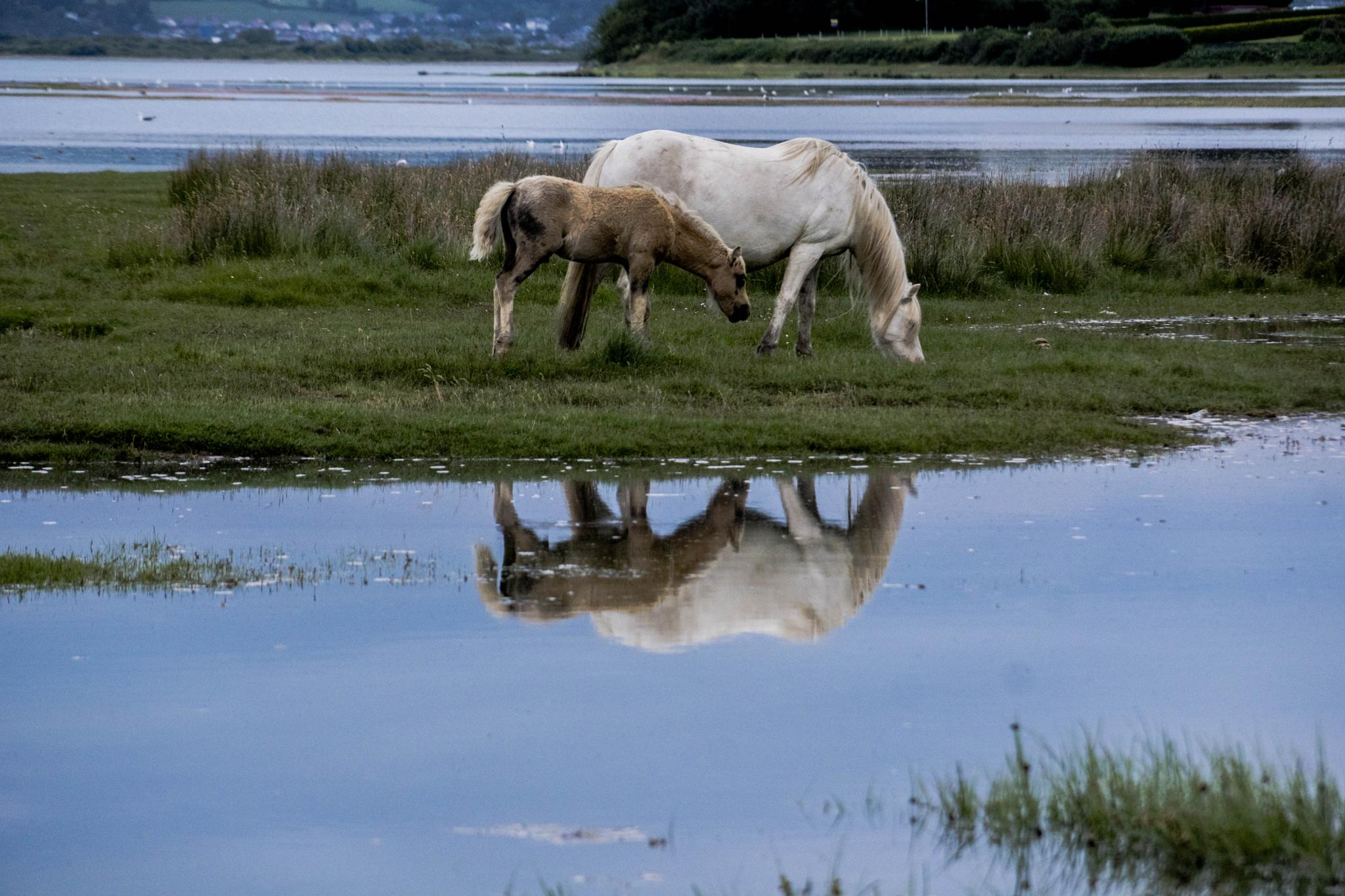 Wild Horses by wayne.mctaggart.9
