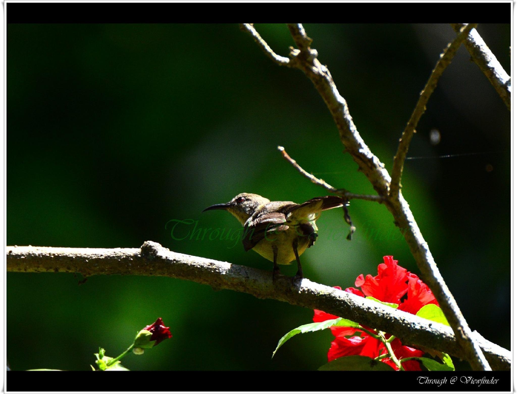 Sun Bird by prashobh.ailyam